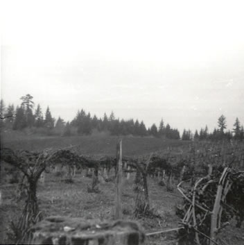 Berry Farm 1972 berry vines