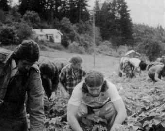 Strawberry Pickin 1971 - Steve Heick foreground