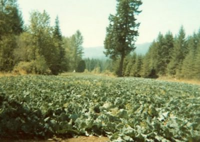 The Land 1973 - 6